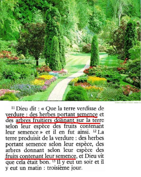 verdure1.jpg